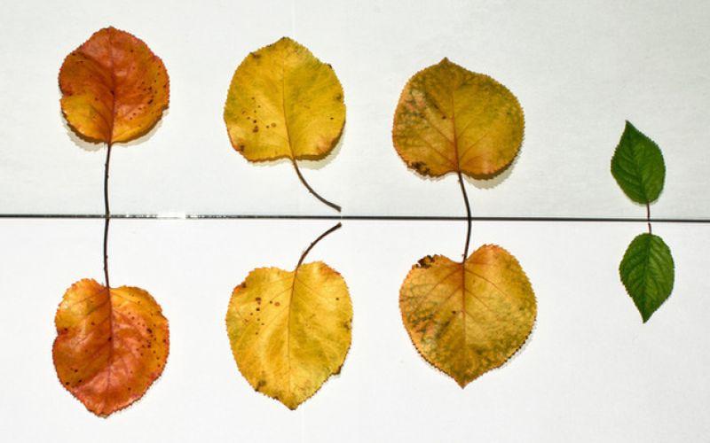 5 bài học các chuyên gia tâm lý đúc kết sau hàng thập kỷ