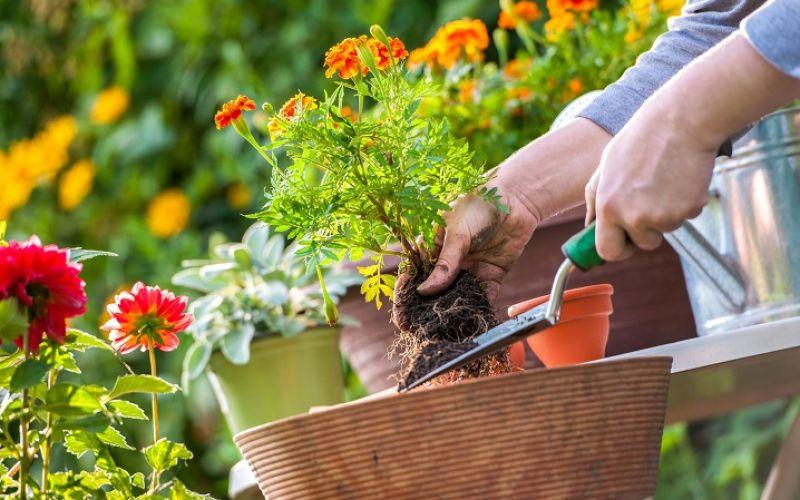 Sai lầm cần tránh để cây trồng trong nhà của bạn không bị chết